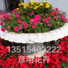 花卉租摆展示