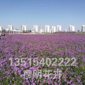 甘肃金昌花海500亩
